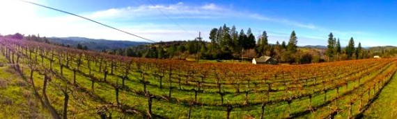 Winter Wine Times – Words from the Chief!